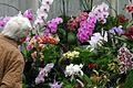 Enjoying The Orchids. RHS Wisley Gardens Surrey UK.jpg