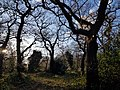 Epping Forest 20180125 150034 (49374527416).jpg