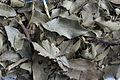 Espinheira-Santa 03 folhas secas para uso medicinal.jpg