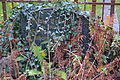 Evangelischer Friedhof Berlin-Friedrichshagen 0014.JPG