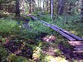 FLT M24 Kopac Blue 1.0 mi - Puncheons of 2 split logs, total of 150' long - panoramio.jpg