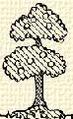 Fa (heraldika).PNG