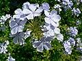 Fale - Giardini Botanici Hanbury in Ventimiglia - 60.jpg