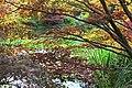 Fall colors, Japanese Maple (29892525991).jpg