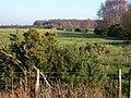 Farmland at the edge of Drumburgh Moss - geograph.org.uk - 808994.jpg