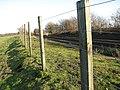 Fence between footpath and railway line - geograph.org.uk - 1608061.jpg