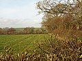 Field, South Nethercott - geograph.org.uk - 1619636.jpg