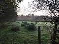 Field near Oakleigh Farm - geograph.org.uk - 605423.jpg