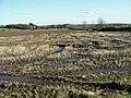 Field of stubble near Fieldhead - geograph.org.uk - 1045011.jpg