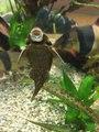 File:Fish nibbling at an aquarium wall.webm