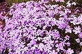 Fleurs en miniature.jpg