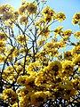 Flor de nuestra tierra.JPG
