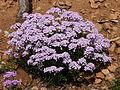 Flore du Moyen Atlas.JPG
