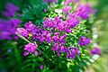 Flowers (14968535011).jpg