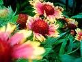 Flowers (206882801).jpg