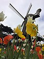 Flowers and Dutch Windmill, Golden Gate Park, San Francisco.jpg