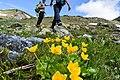 Flowers of Jablanica Mountain, Struga 07.jpg