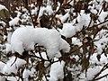 Fluffy Snow (16483379877).jpg