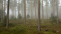 Fog in a forest, Telemark 2.jpg