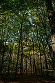 Forêt de Rambouillet — automne 2018 (1).jpg
