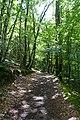 Forest @ Roc de Chère @ Talloires (35258943970).jpg