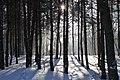 Forest Marki 1.JPG