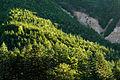 Forest in Yatsugatake 19.jpg