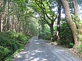 Forest road above the Greenhill YMCA centre, Newcastle - geograph.org.uk - 1459379.jpg