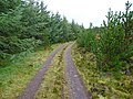 Forest track - geograph.org.uk - 987743.jpg