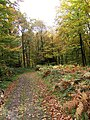 Forest track in the Wyre Forest - geograph.org.uk - 1557176.jpg
