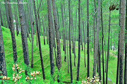 Forests in Almora over hills Forests and Valley of Uttarakhand India (2).jpg