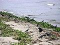 Fort Kochi beach B1ഫോര്ട്ട് കൊച്ചി ബീച്ച്.jpg