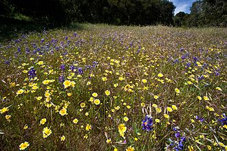 Fort Ord - Wildflowers at Fort Ord