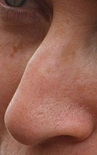 Human nose Feature of the face