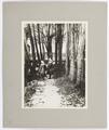 Foto på barn och träd - Hallwylska museet - 102231.tif