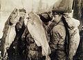 Four-foot long cod are slung across the backs of cod fishermen.jpg