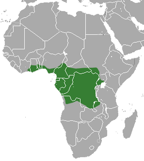 Franquet's Epauletted Fruit Bat area.png