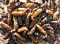 Fried Termites - Flickr - Dick Culbert.jpg