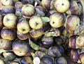 Fruits of Borassus flabellifer 01.JPG