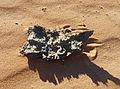 Fulgurite-Adrar mauritanien (2).jpg