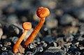 Fungi and lichen (15627110202).jpg