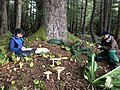 Fungi for All - September 2017 - Tongass National Forest 01.jpg