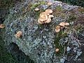 Fungi of Bory Tucholskie National Park.jpg