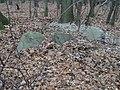 Głazy narzutowe w Lesie Kabackim - panoramio.jpg