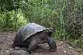 Galápagos Inseln, Ecuador (13917398073).jpg