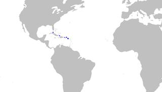 Springers sawtail catshark Species of shark