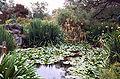 Garden pond, Los Angeles Arboretum.jpg