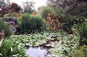 Los Angeles County Arboretum and Botanic Garden - Pond view