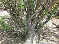 Gardenology.org-IMG 4249 hunt0904.jpg