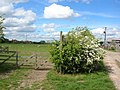 Gate at Woodhouse Farm - geograph.org.uk - 431721.jpg